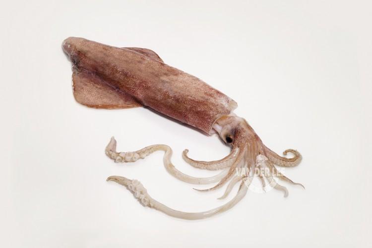 Calamar entero